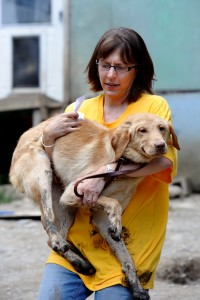 "Annie Hornish, HSUS State Director for Connecticut, carries this dog to the staging area to be evaluated. Dozens of dogs where removed from the property of 283 Hennessy Road in Bakersfield Vermont during a Humane Society of the United States ""puppy mill"" investigation and removal of the animals. Photograph by David Sokol"